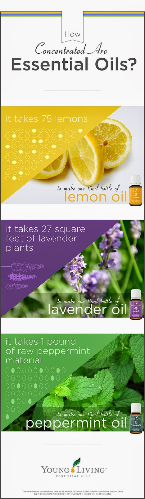 Young Living how concentrated are oils